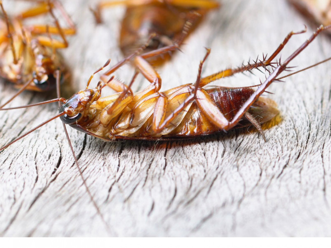 Turn to proven cockroach treatment services